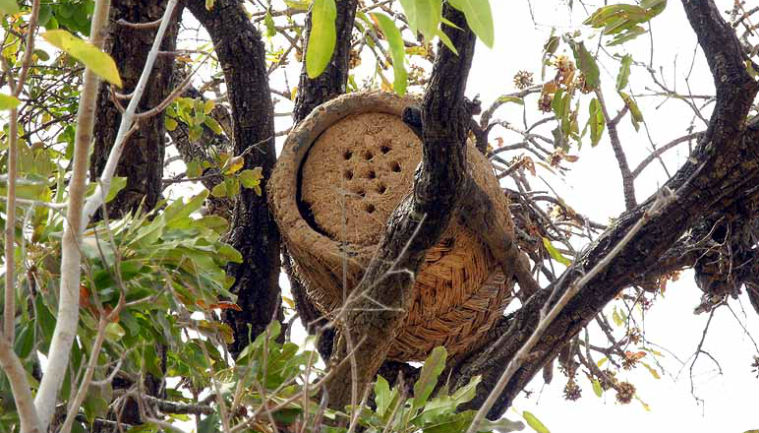 christa-neuenhofer-traditional-bee-hive-b-cover