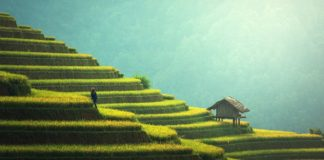 agricoltura Pixabay