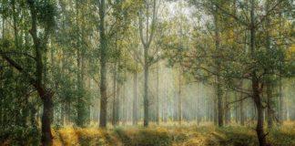 foreste pixabay