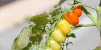dieta mediterranea pixabay